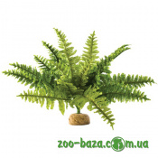 Exo Terra Rainforest Plant Boston Fern